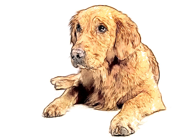 golden-retriever-642016_640.jpg